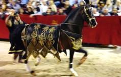 Good horse photo